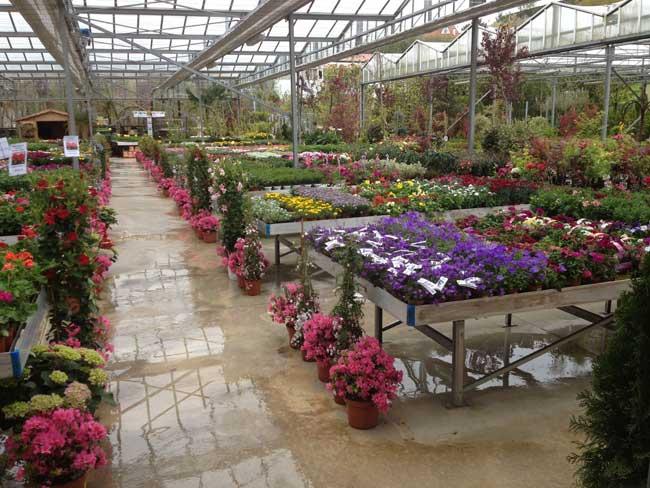 La encina centro de jardiner a - Centros de jardineria madrid ...