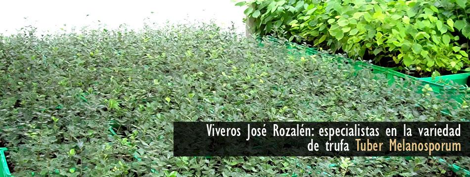 Viveros jos rozalen for Viveros en granada
