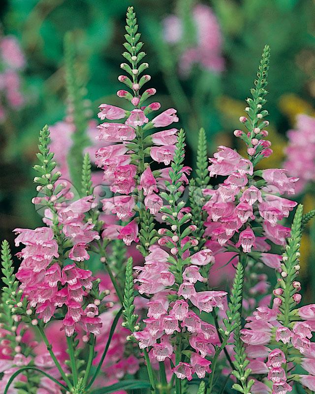 se usaron originalmente en los prados de flores silvestres