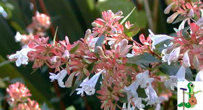 Arbustos y coniferas centro de jardiner a viveros gimeno - Viveros gimeno ...