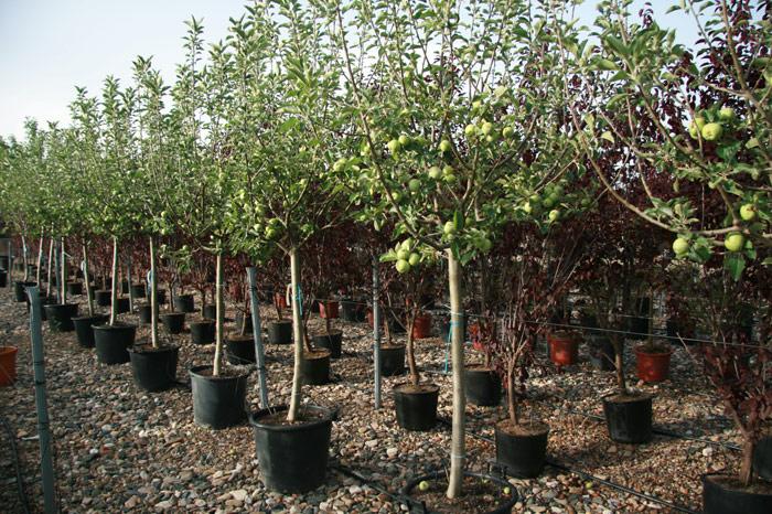 Grandes frutales para el jard n viveros ver n for Vivero el jardin