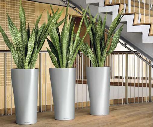 Decoracin de espacios con plantas agro and garden systems - Plantas decoracion interior ...