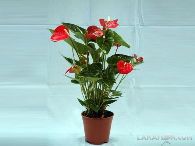 Plantas naturales > Viveros Laraflor