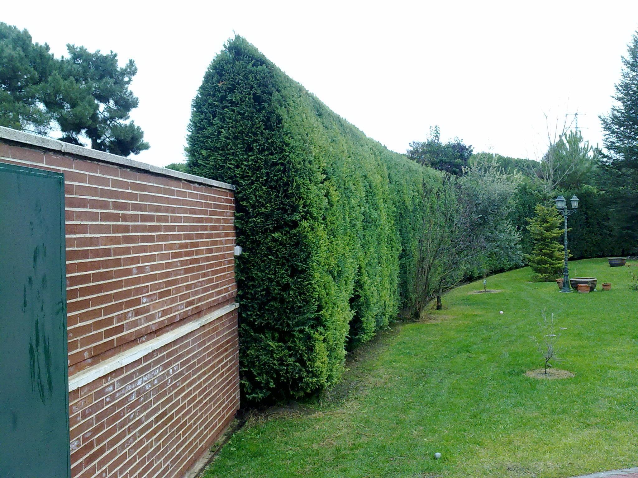 Podas de mantenimiento y restauracion de setos jardines fito for Cierre jardin