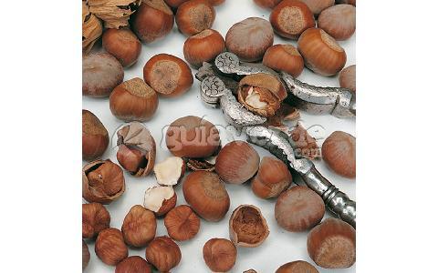 Corylus avellana avellana avellanas avellano for Viveros fuenteamarga