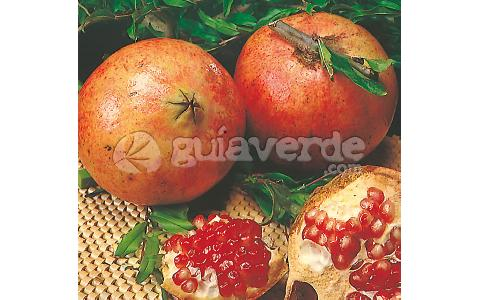 pome granate tree-Punica granatum 'Mollar de Elche'