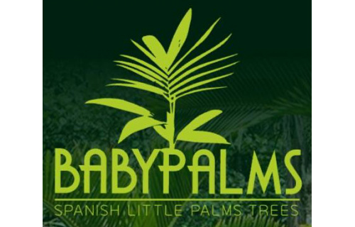 BabyPalms