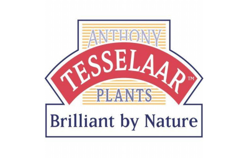 Anthony Tesselaar Plants