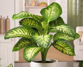 La gu a m s completa de plantas y flores para for Todas las plantas son ornamentales
